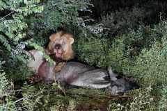Safaris Happening Now