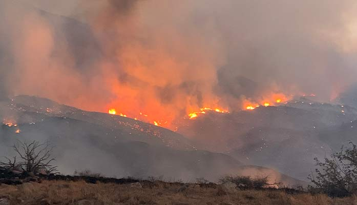 Following Biden Administration Letdown, Arizona House To Undertake Forest, Wildfire Management Itself