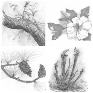 Nature Scenes Note Cards