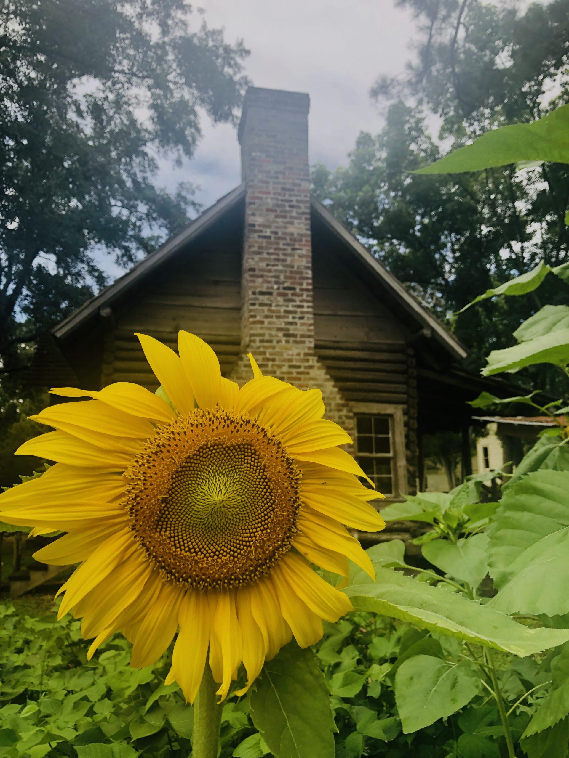 Smith Homestead Garden 2019 (42)