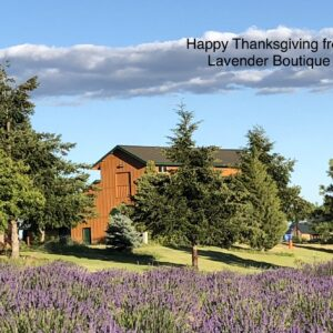 Lavender Ranch at East Wenatchee