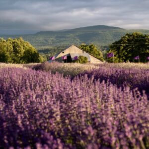 B&B Family Lavender Farm