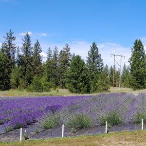 Reka's Acres Lavender Farm LLC