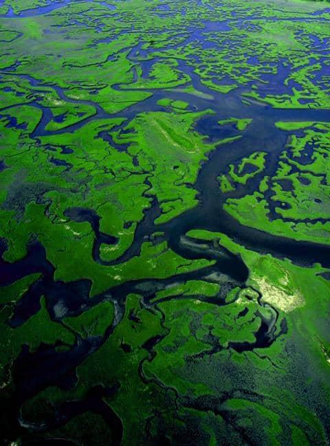 Intracoastal-Waterway-Marsh