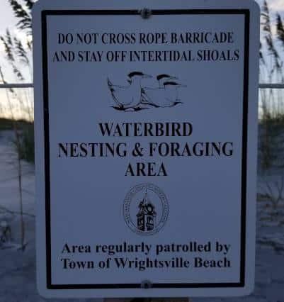 wrightsville-beach-waterbird-nesting