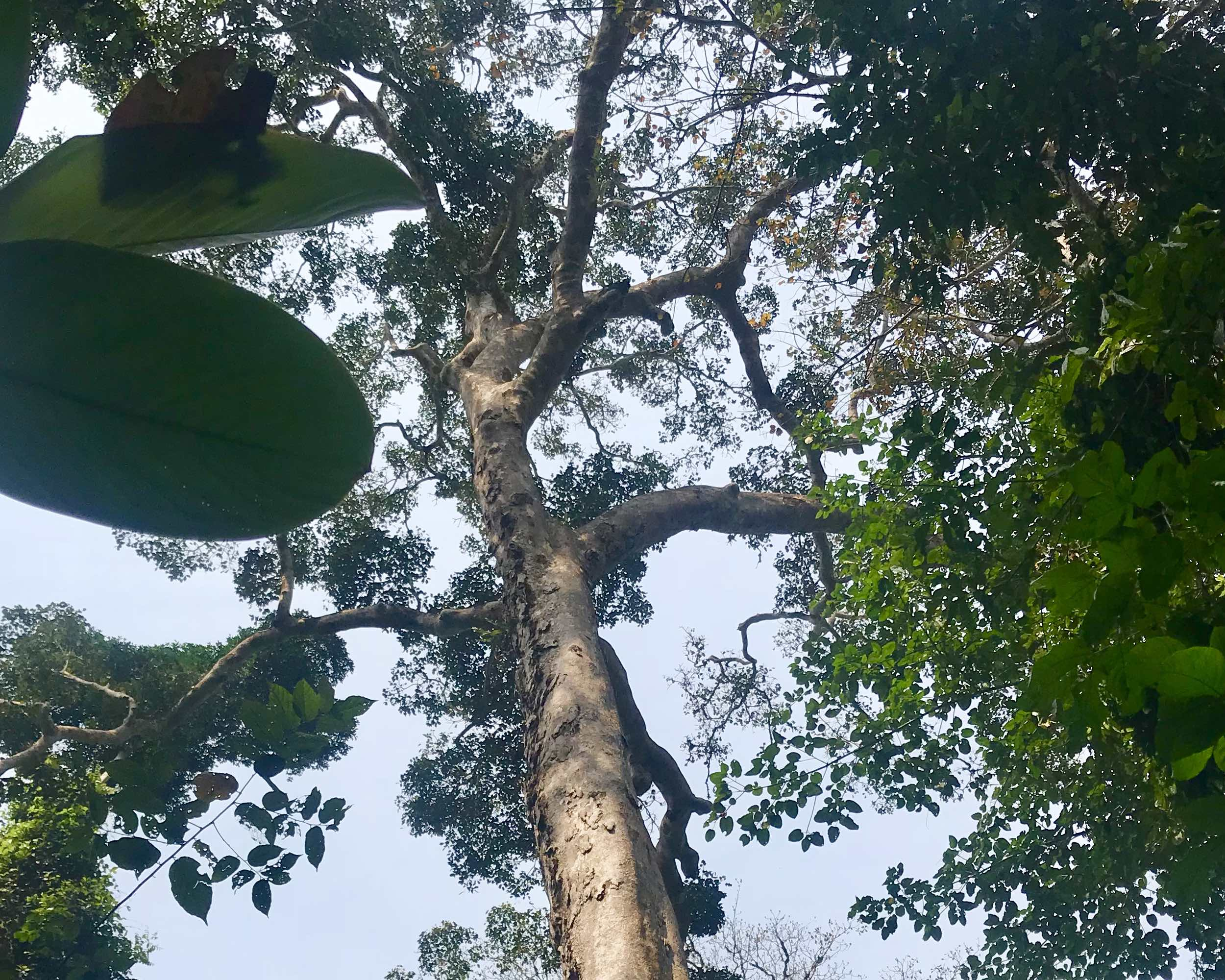 Sustainable ethical tropical lumber timber FSC