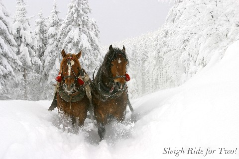 A Sleigh Ride for Two!