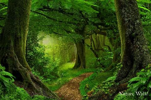 Nature Walk/Photo Safari!