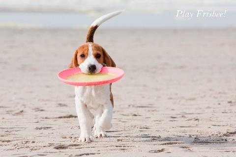 Play Frisbee!