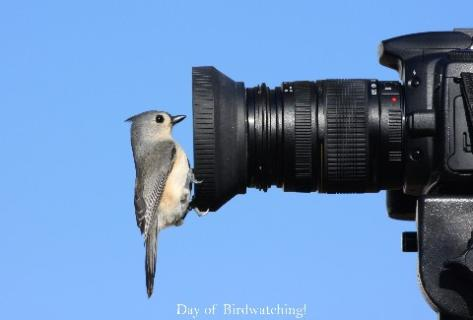 Go Bird Watching!