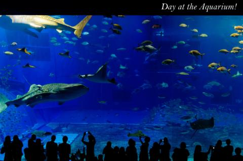 Visit the Aquarium Together!