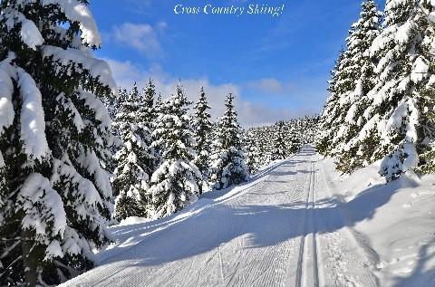 Cross County Skiing!