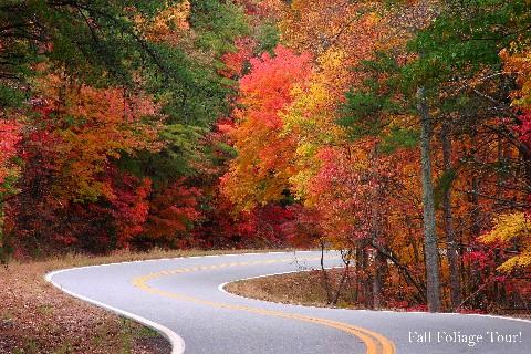Fall Foliage Tour!