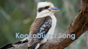 Kookaburra Still
