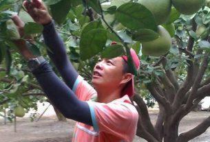 王國泰 - 台南青農聯誼會