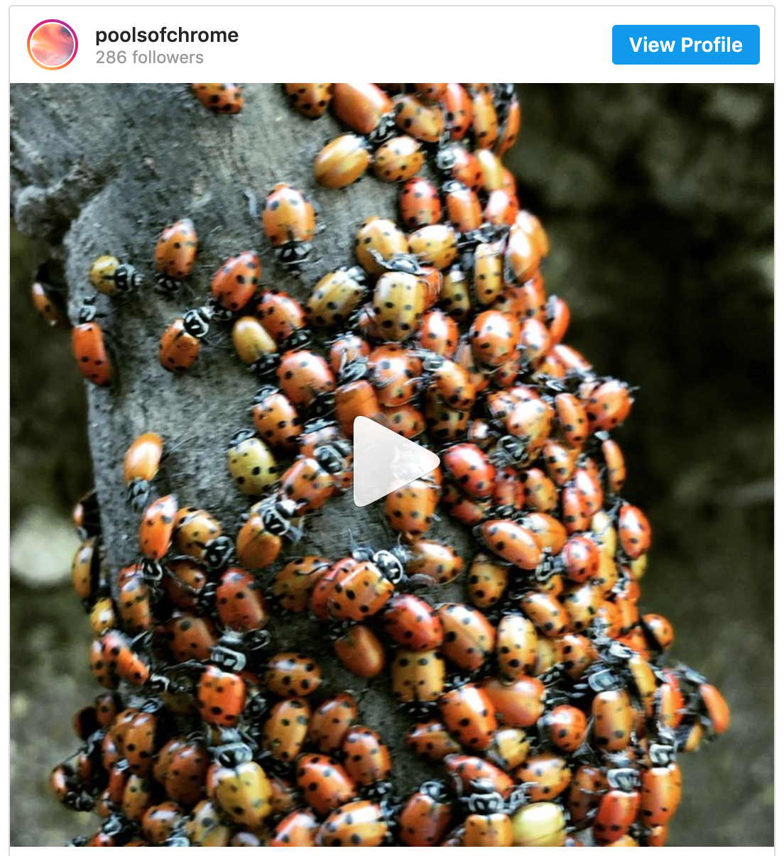 Spotted: A Swarm Of Ladybugs So Huge, It Showed Up On National Weather Service Radar
