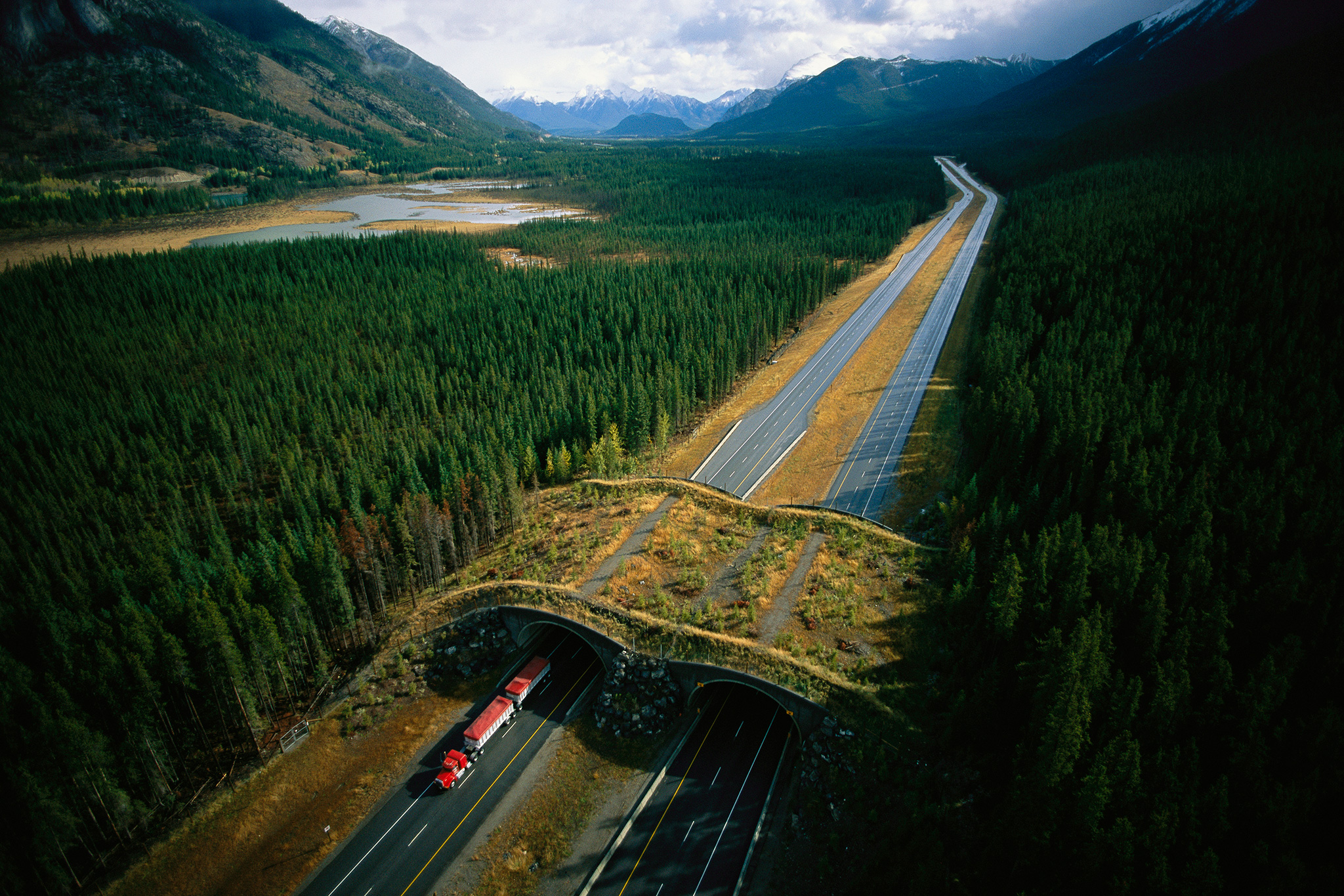 California Will Build the Largest Wildlife Crossing in the World