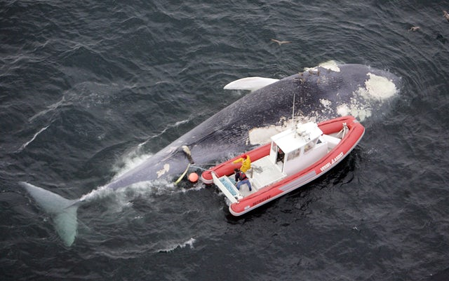 California sound system tries to keep whales and ships apart