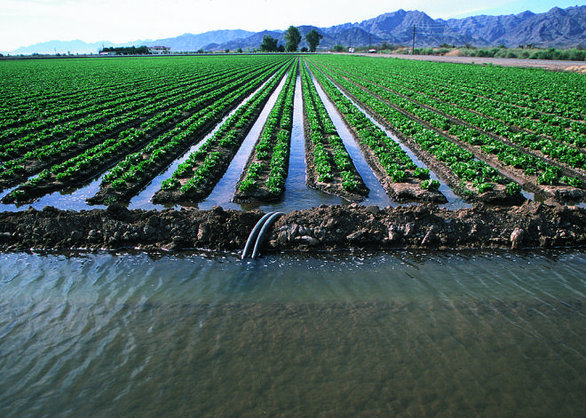 California farmers face 'catastrophic' water restrictions. Can they adapt to survive?