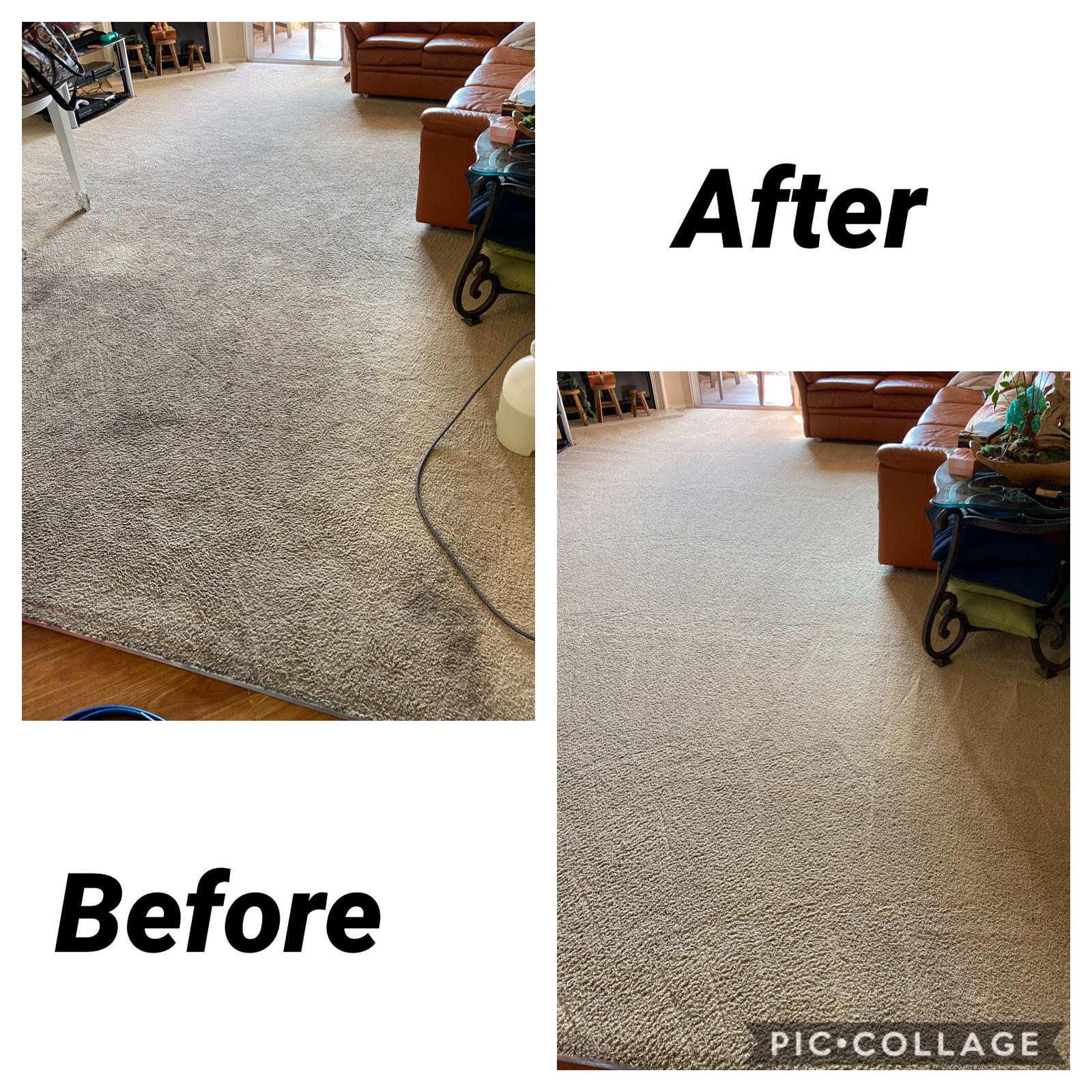 pet stain removal carpet cleaning irvine