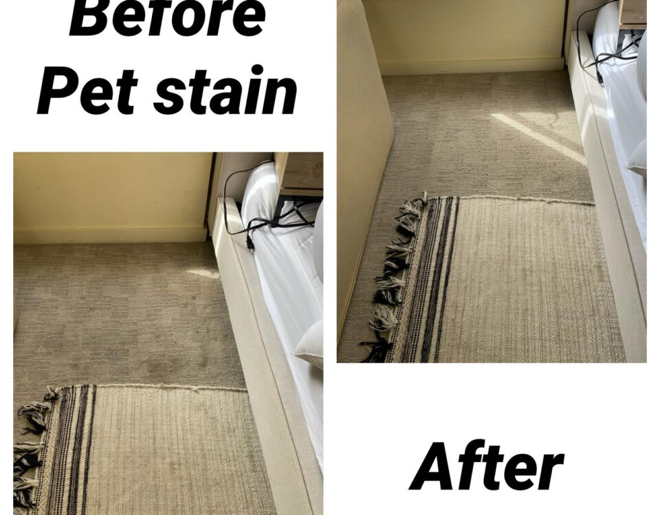 pet stain removal carpet cleaning in irvine