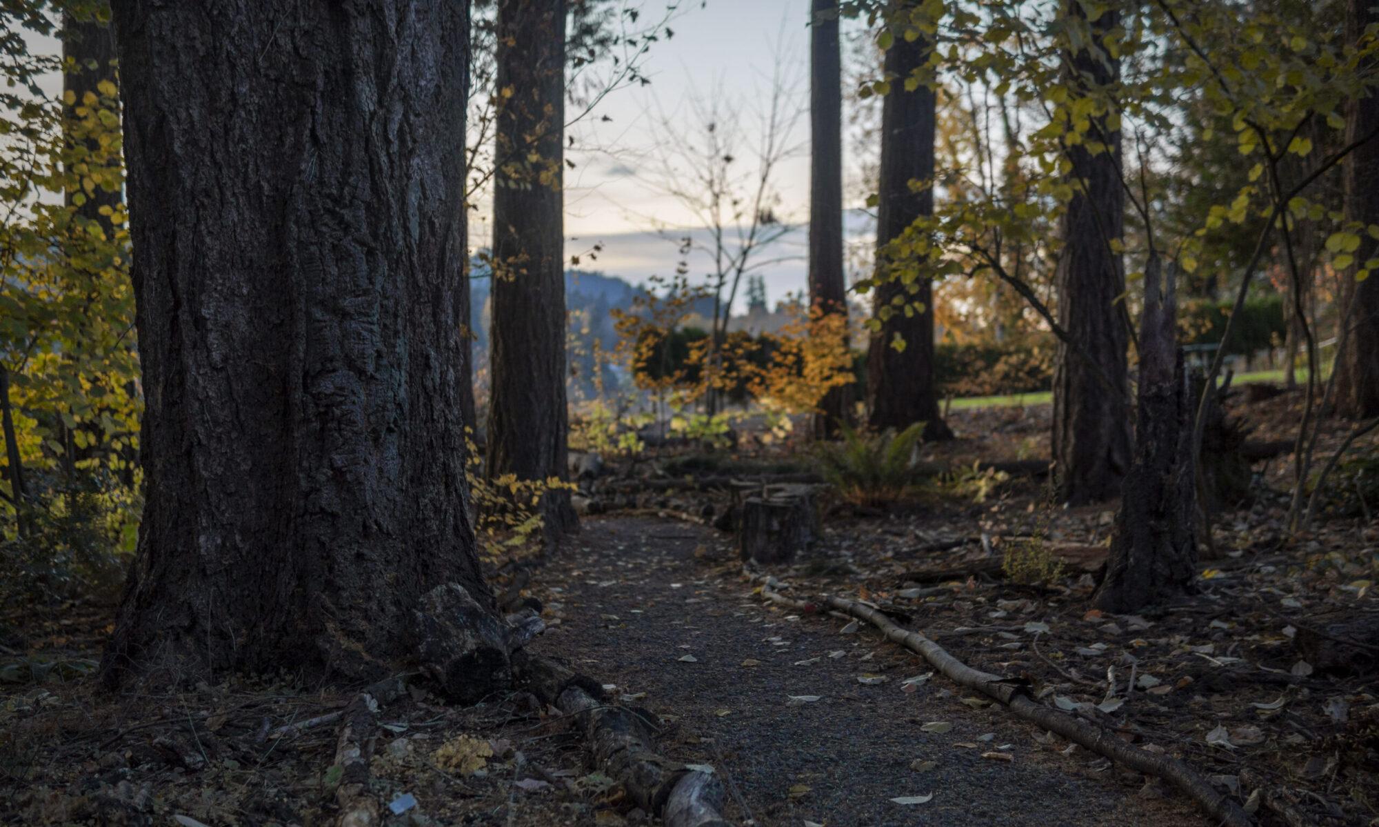 Homewoods on the Willamette
