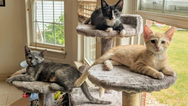 3 cats sitting on elevated disks by a window