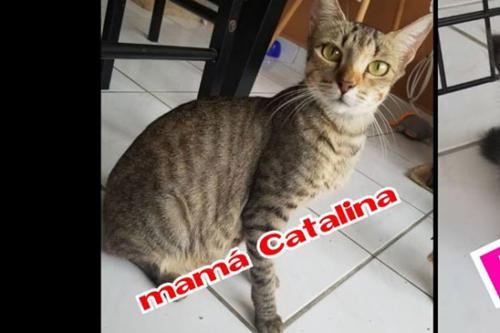 Mama Catalina
