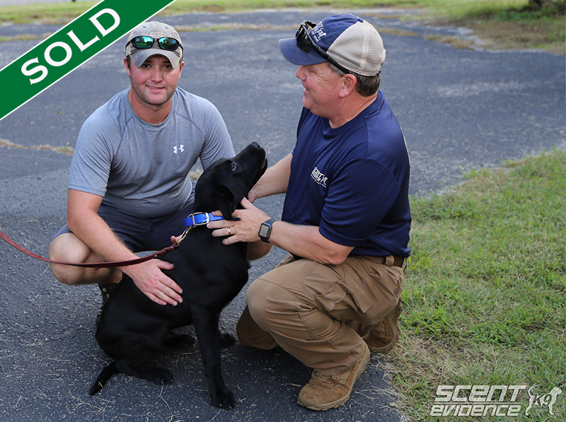 Fairfax Police - Browser - Trained K9's for sale -SOLD