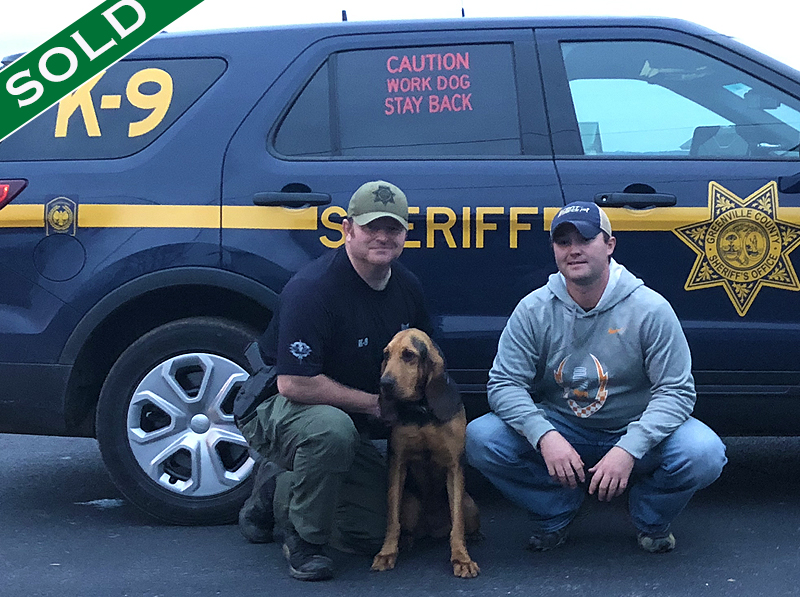 Greenville SC SO - Bree - Trained K9's for sale -SOLD