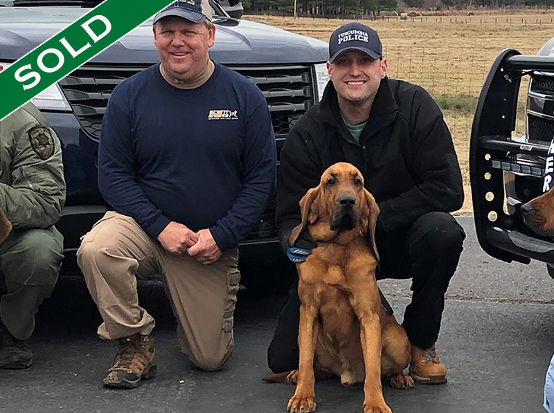 Tuscumbia PD - Eli - Trained K9's for sale -SOLD