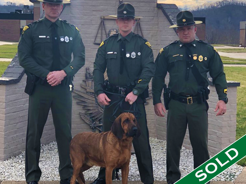 WVSP- Shiloh new - Trained K9's for sale -SOLD