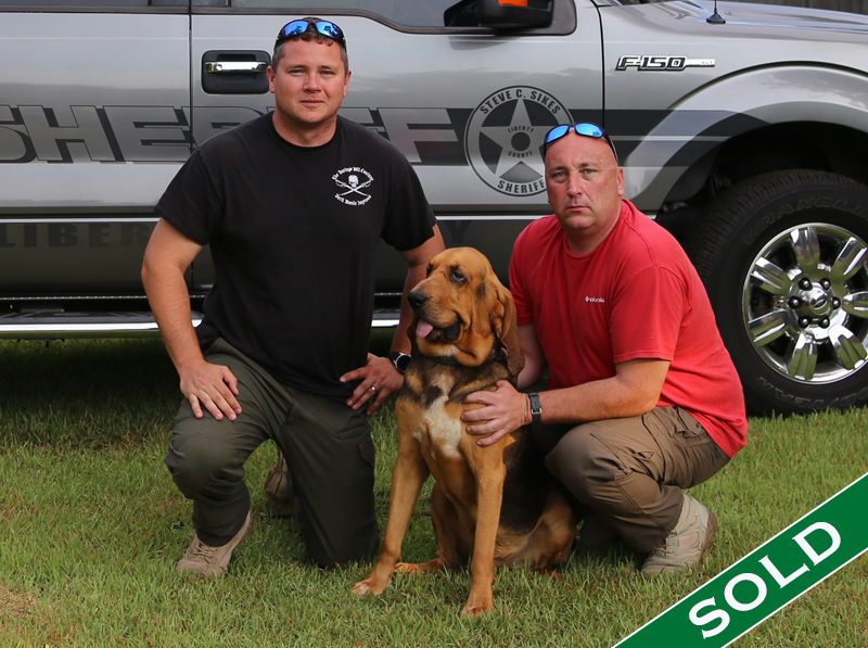 Liberty Co- Charlie - Trained K9's for sale -SOLD