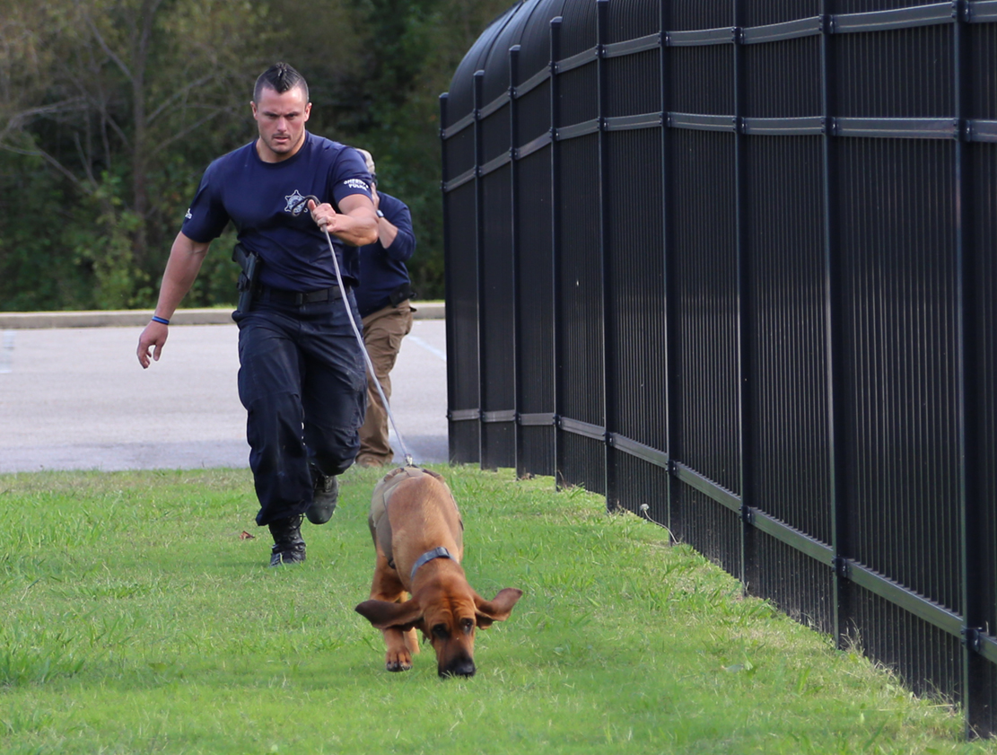 Human Scent Discriminate K9 Training by Scent Evidence K9