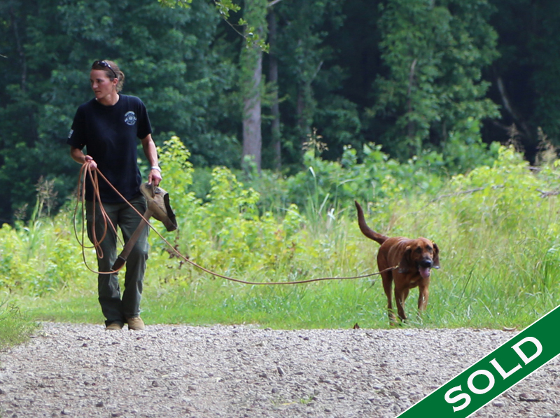 Maryann- Simba - Trained K9's for sale -SOLD