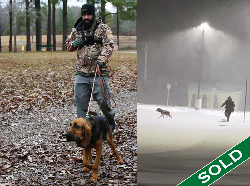 Kendall County Bloodhound Rizzo - Trained K9's for sale -SOLD