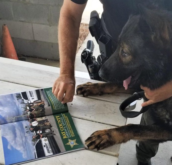 BCSO K9 Ronnie and his handler Cpl. Jeff Duggins are checking out the most recent edition of Police K9 magazine. They're reading a feature about the BCSO K9 Unit and it's recent training on Scent Discriminate K9 Trailing.