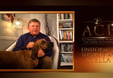 Bloodhound Stella Wins Top AKC Award