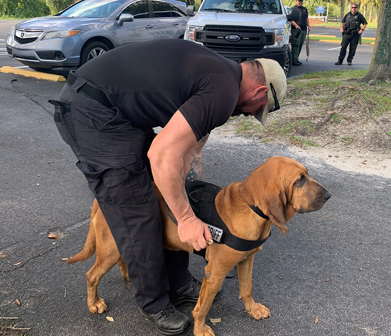 Lee County Bloodhound Bringing The Lost Home K9 Training