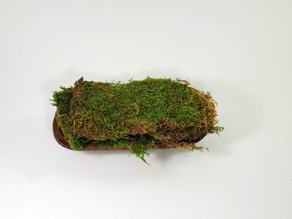 Sheet Moss - Natural Dried