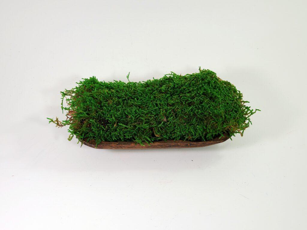 Sheet Moss - Preserved Green