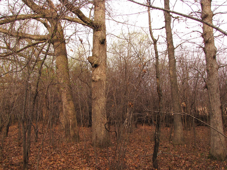 Blackbird Point 4-12-10 White Oaks