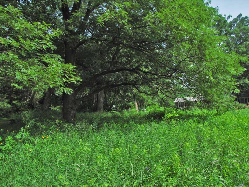 Forest Ave Oak Savanna 2010 6-25 5741