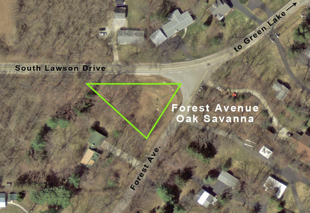 Forest Ave Savanna map 2014