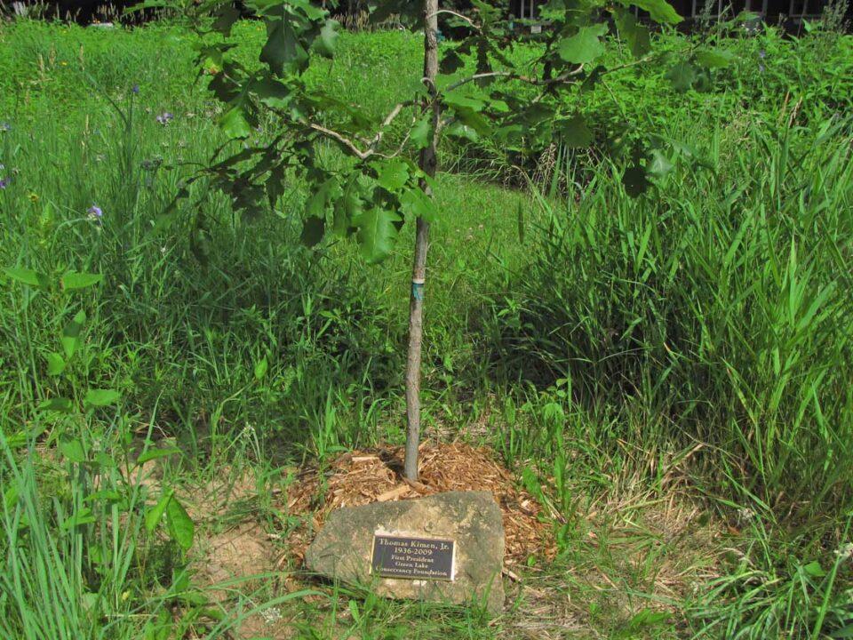 Forest Ave - Tom Kimen Bur Oak 2010 6-5 5724