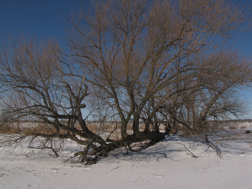 Silver Point Conservancy1 2-18-10