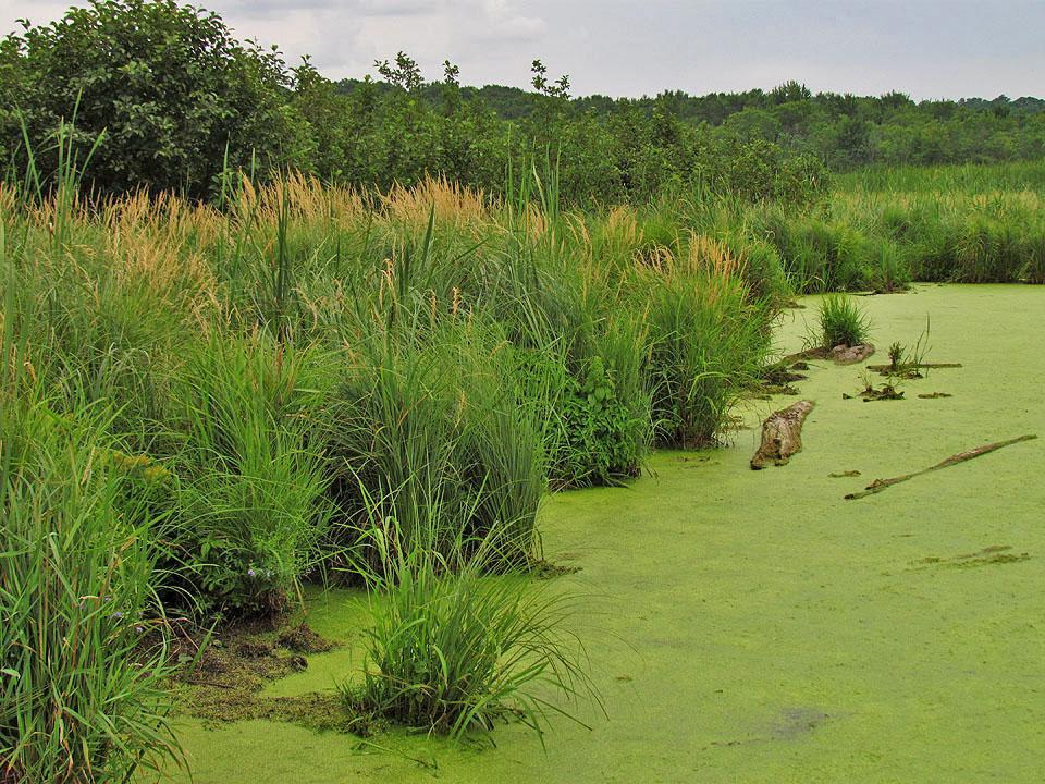 Sugar Island Wetlands 8-8-11 from Inlet4 A