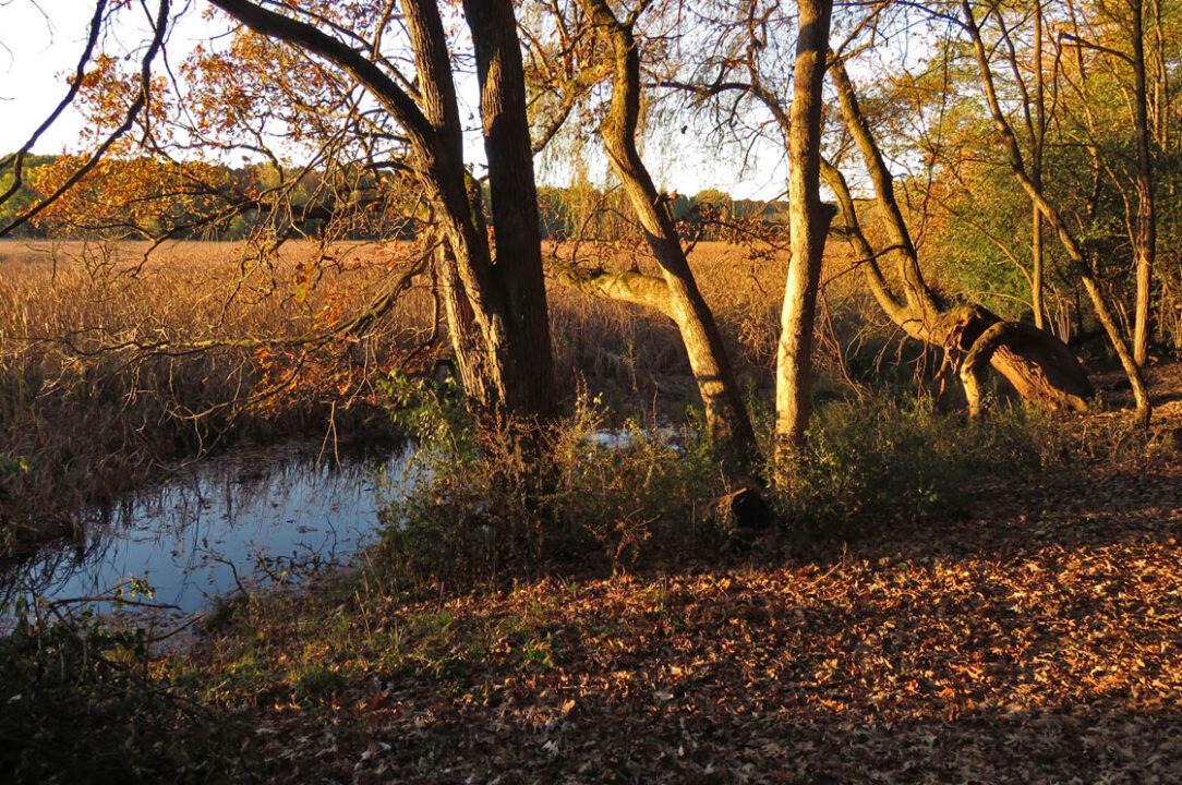 Tichora Conservancy 2018 10-21 8796 Spring Lake