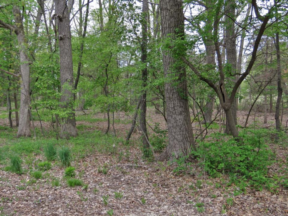 Wick Nature Preserve 2021 5-10 0078