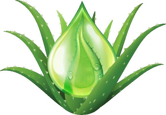 Plant_wDrop_L